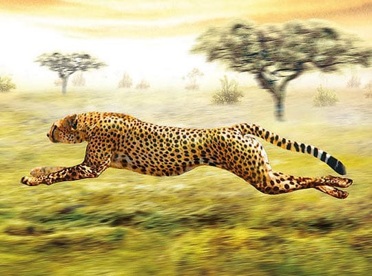 Realistic Illustration of Cheeta by Adrian Chesterman